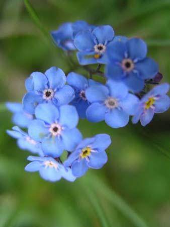 44-flori-de-munte-81