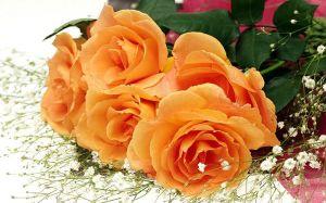 1440x900_High_resolution_flower_art_123453