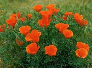 flower_005-1024x768