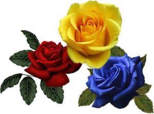 tricolor cu trandafiri