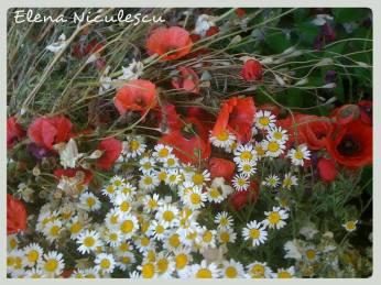 maci si flori de camp pers