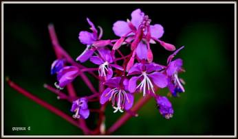 flori mov1