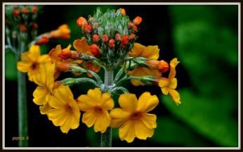flori galbene de pictat