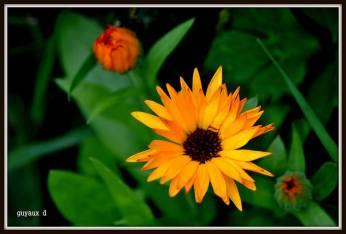 flori oranj de pictat