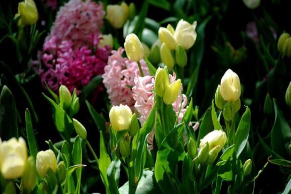 flori spring in gradina
