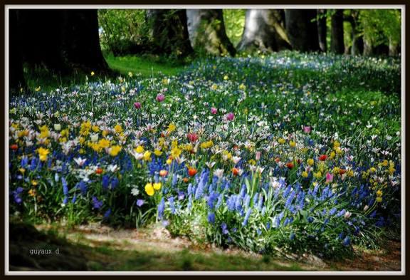 flori spring multe