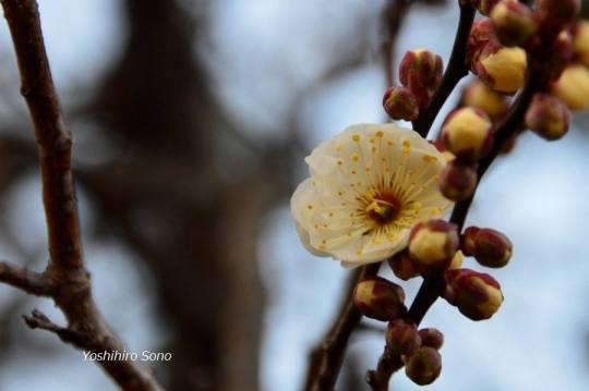 flori spring