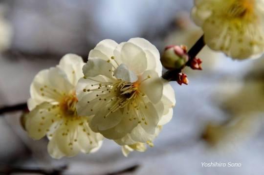 spring  white flowers1