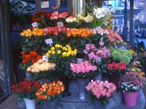 trandafiri v img_2493