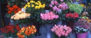 trandafiri v img_2493dec