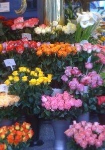 trandafiri v img_2493dec2