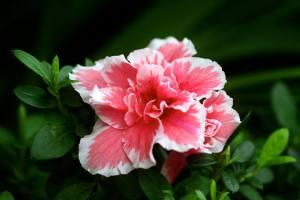 floare exotica