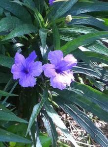 floare lila noua