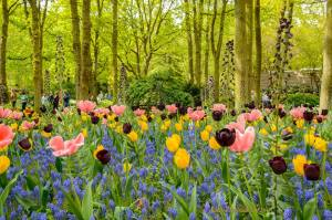 flori de pictat-lalele...