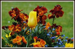 flori de pictat