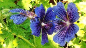flori exotice mov