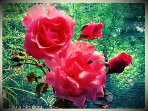 trand roz satya