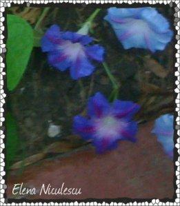 IMG_4221 flori