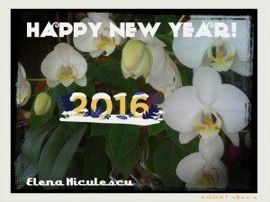 orhideea alba an nou