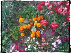 flori 12