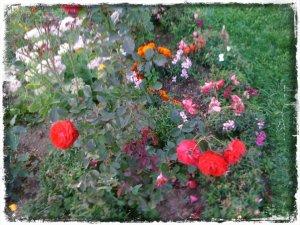 flori 2