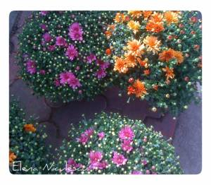flori-piata