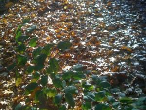 frunze-cu-soare
