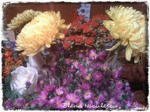 crizanteme-incasa