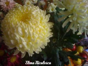 crizanteme-pe-masa