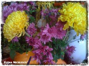 crizanteme13