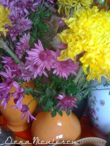 crizanteme13b