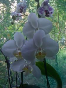 orhidee-14b