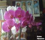orhidee-ff2-dec