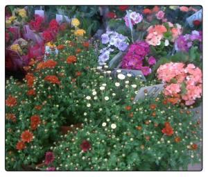 piata-de-flori