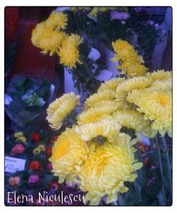 piata-de-flori2