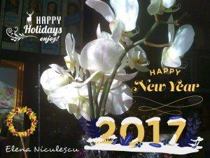 urare-cu-orhidee2-2017