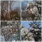 collage-9-ian-natura
