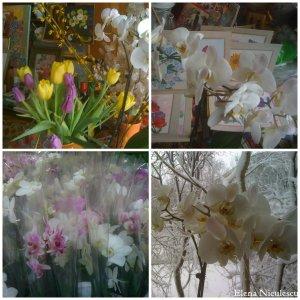 collage-cu-orhidee