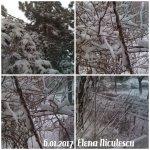 collage-iarna-6-ian-2017