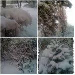 collage-iarna-7-ian