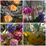 collage-spring-flowers