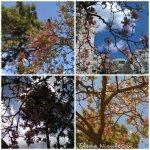 collage magnolii 7apr