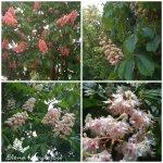 collage flori decastan