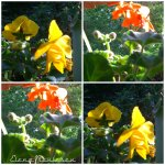 collage flori geam 5mai