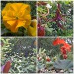 collage flori geam 9mai