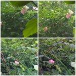 collage flori maces 4mai