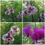 collage orhidee 7mai