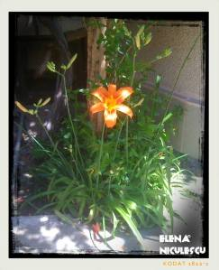 crin portocaliu 16