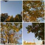 collage copaci 18oct
