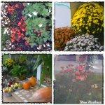 collage flori dif 17oct
